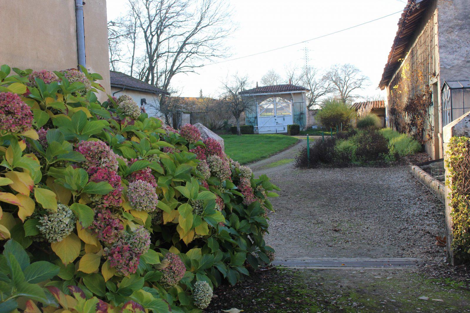 chateau-niii-Fleyriat - hortensias @ francoyse Krier