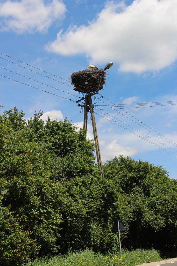 pologne nid de cigognes