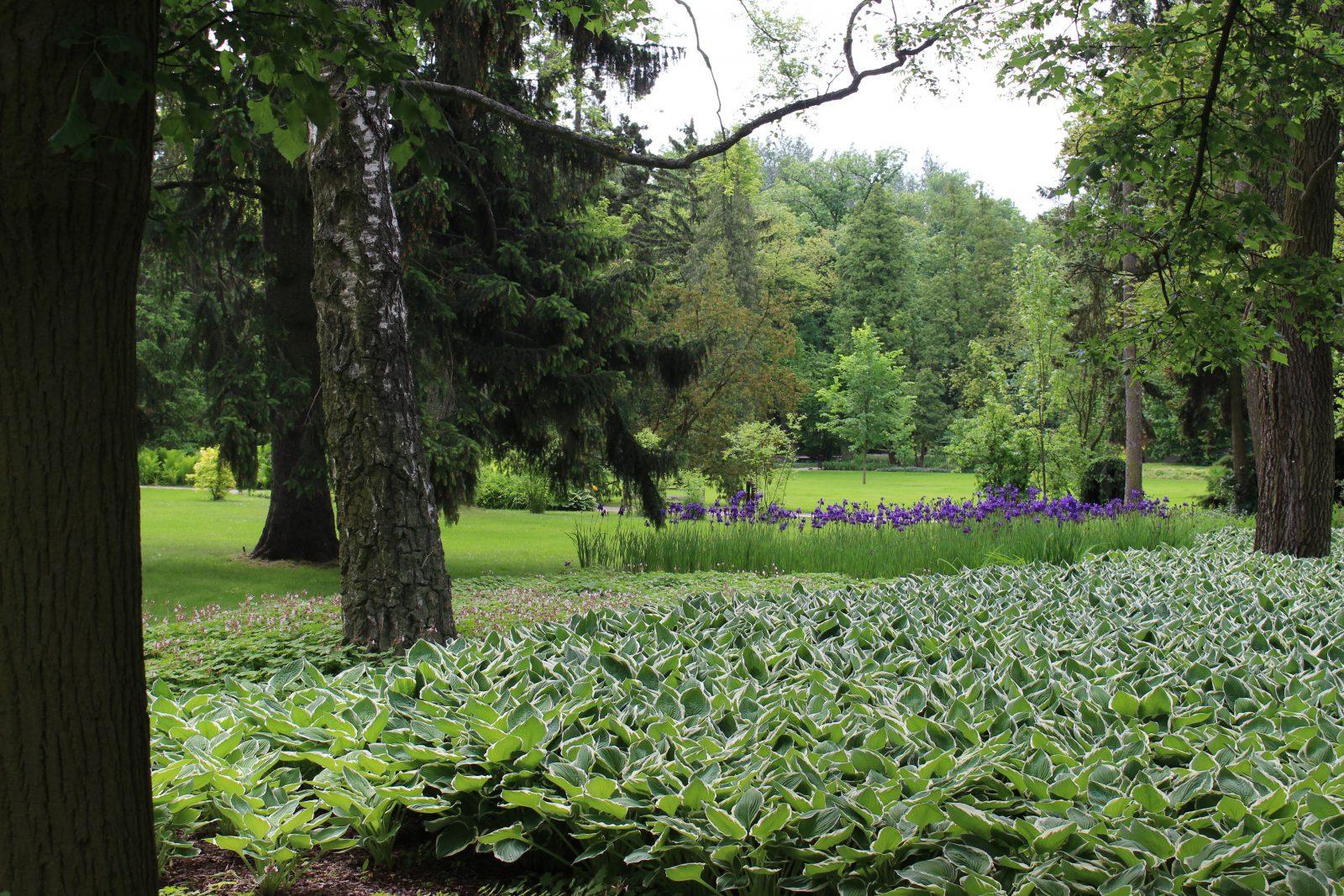 Zelazowa Wola parc végétation