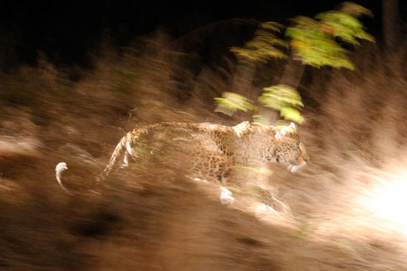 exposition Photo-cliubn Aigle Course dans la nuit MM