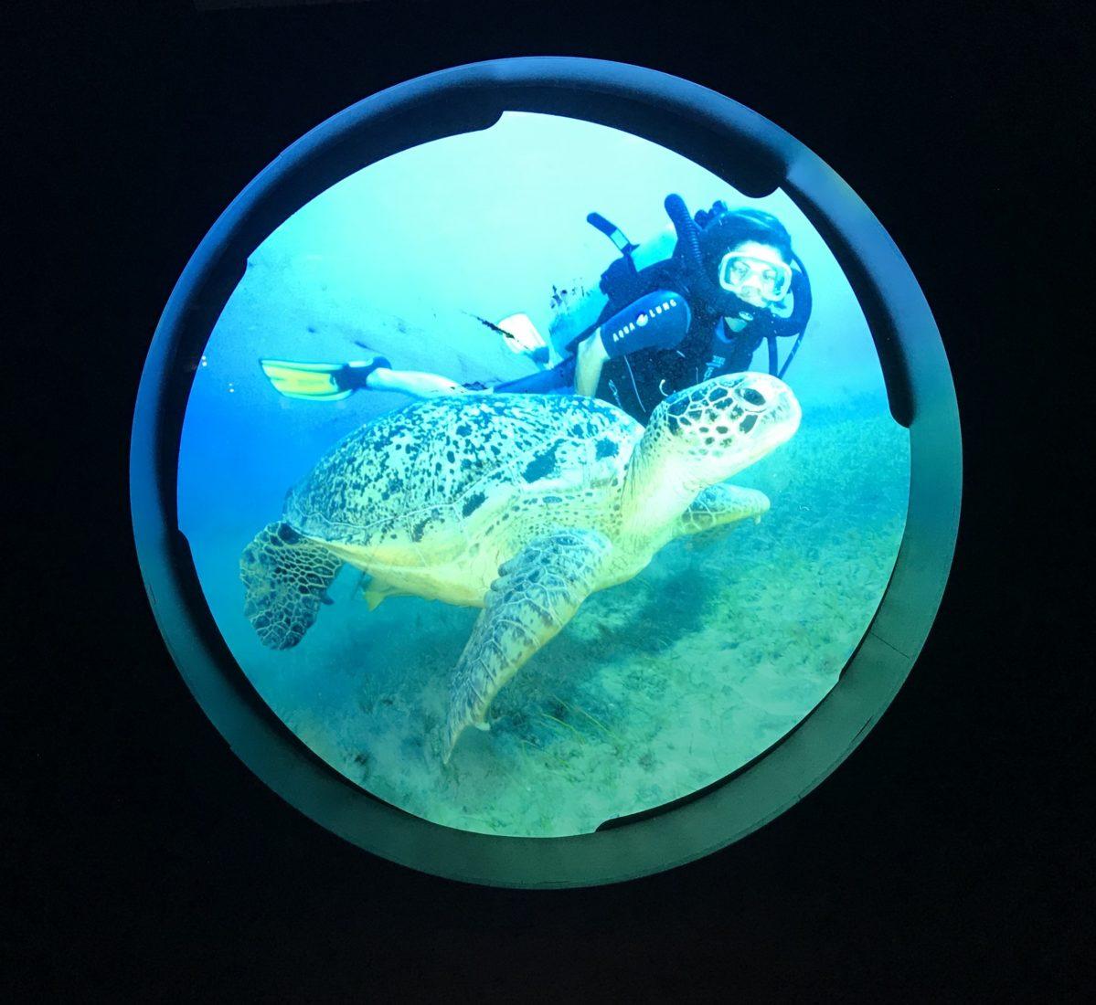 Nausicaa Boulogne-sur-Mer tortue