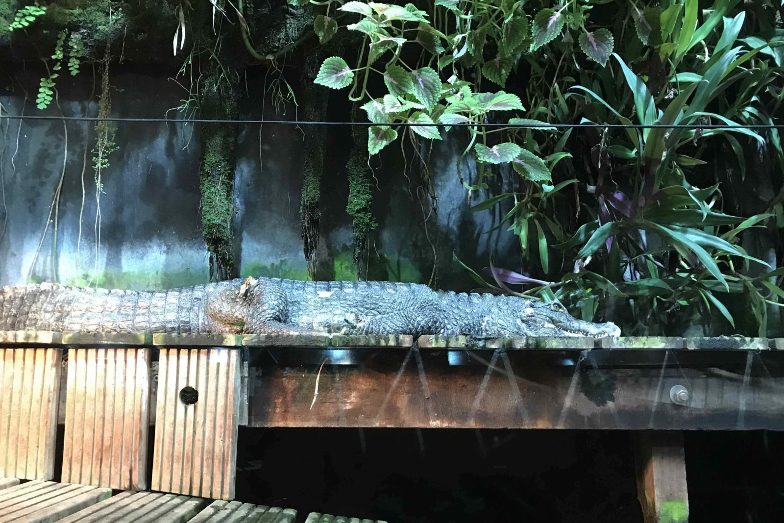 Nausicaa Boulogne-sur-Mer alligator