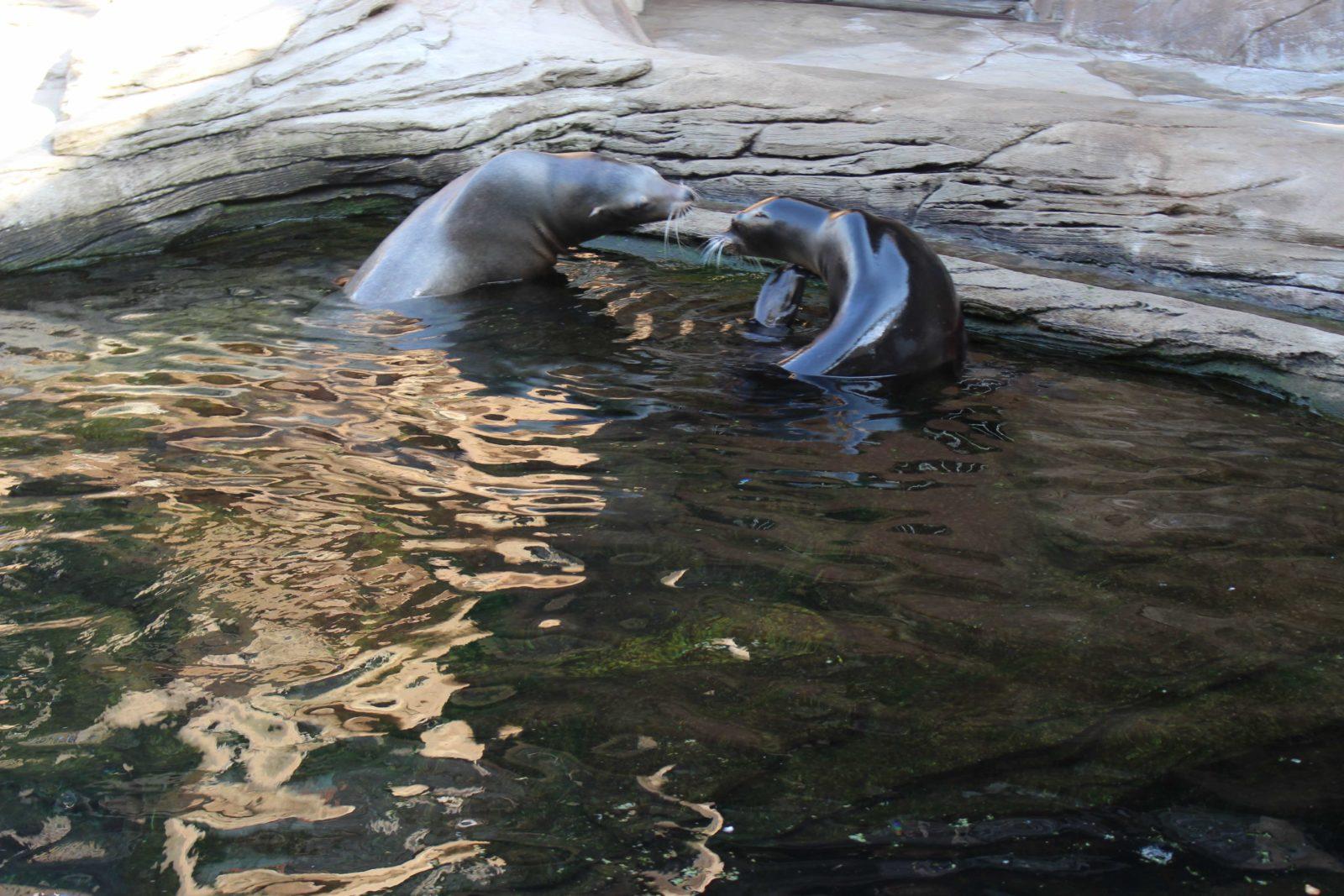 Nausicaa Boulogne-sur-Mer lions de mer