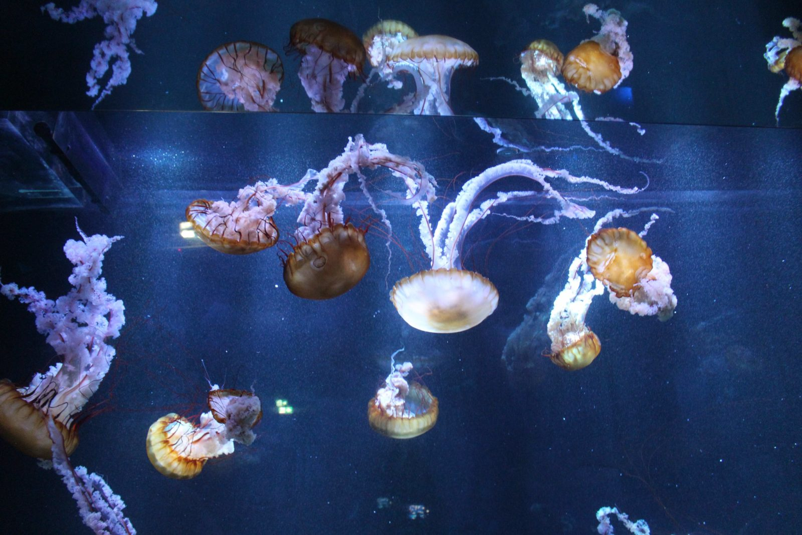 Nausicaa Boulogne-sur-Mer méduses