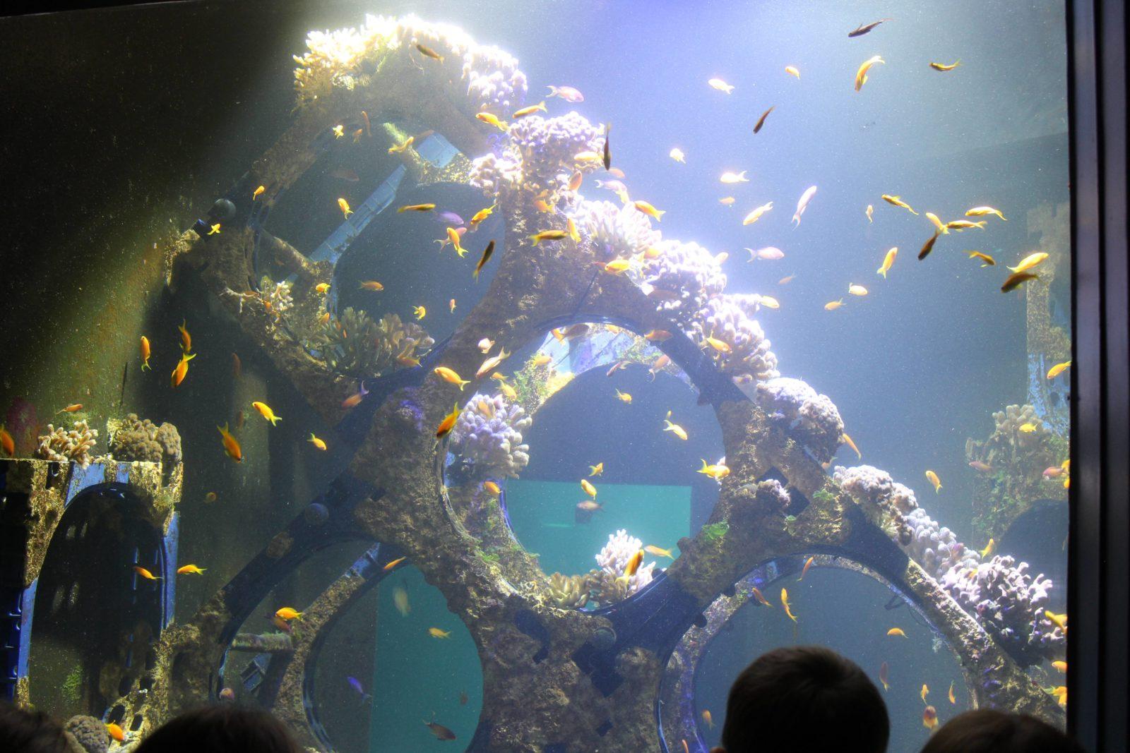 Nausicaa Boulogne-sur-Mer poissons et rochers