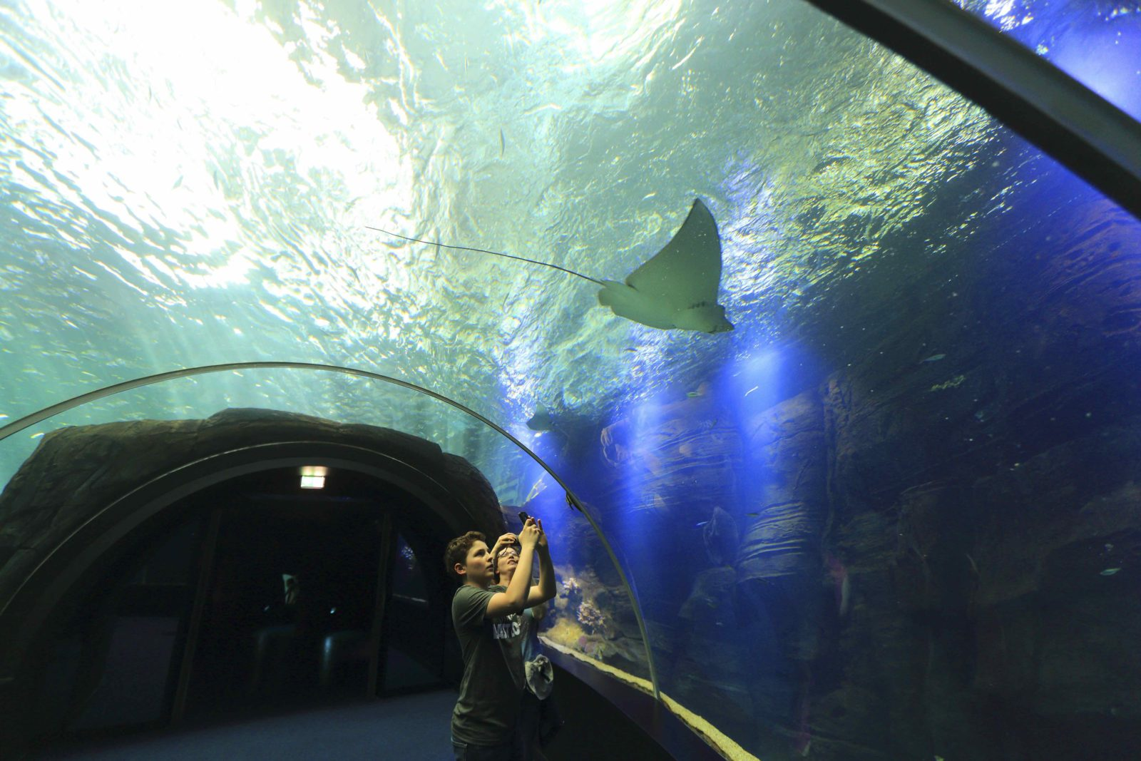 Nausicaa Boulogne-sur-Mer tunnel et raie