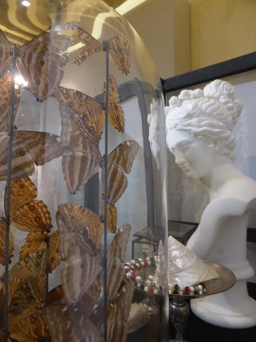 Papillons, sculptures Chambres des Merveilles Château d'Angers