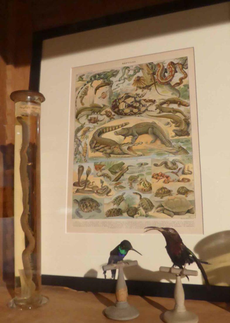 Chambres des Merveilles Château d'Angers côté animaux