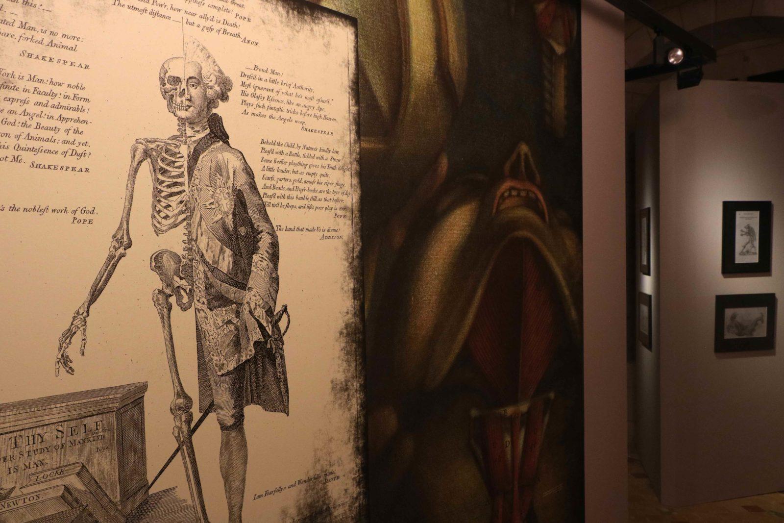 Chambres des Merveilles Château d'Angers côté sciences