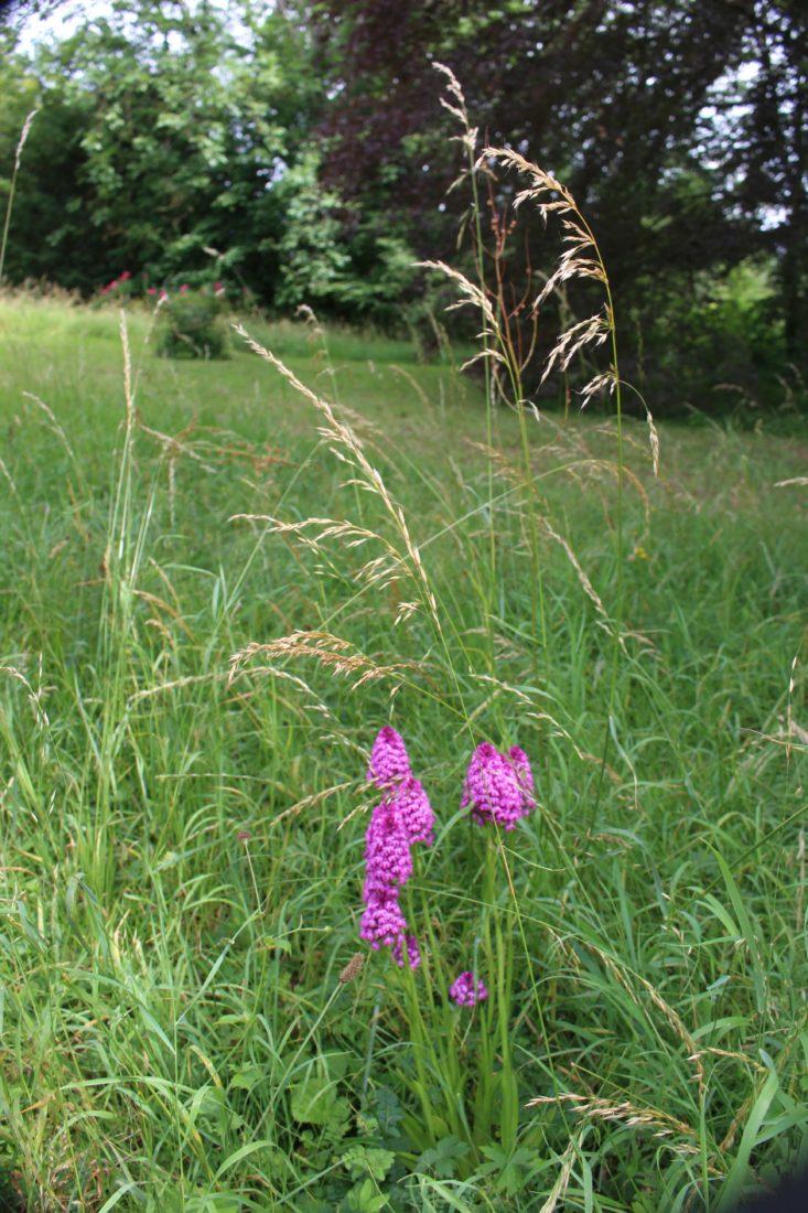 Monts-Boucons Besançon Colette orchidées sauvages