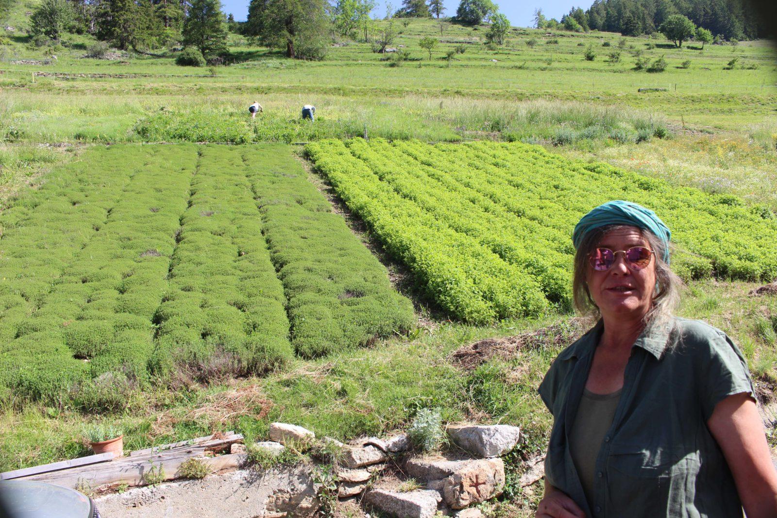 Commeire Isabelle Gabioud y cultive des plantes médicinales.