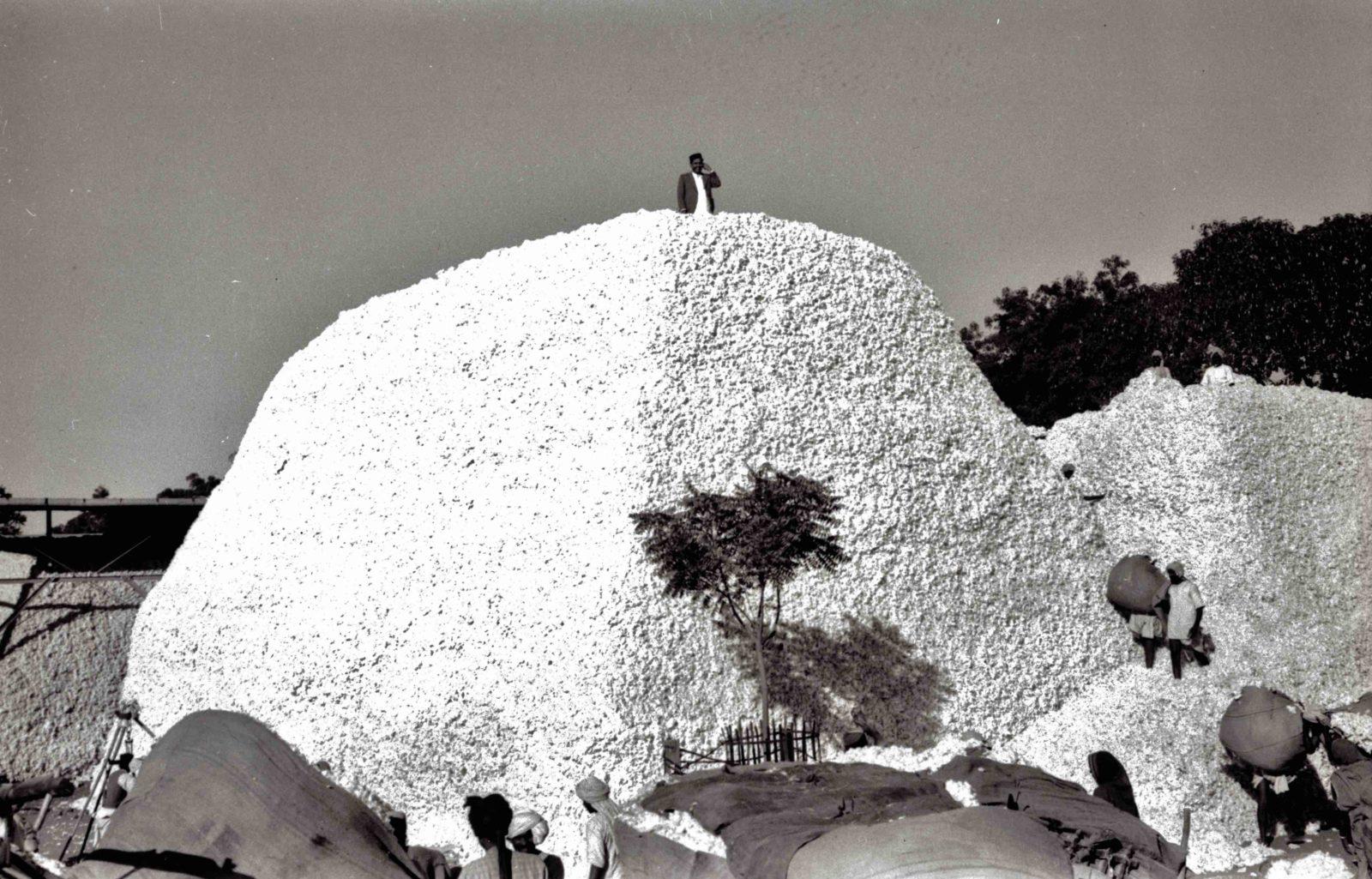 Montagne de coton à Khamgaon, inde