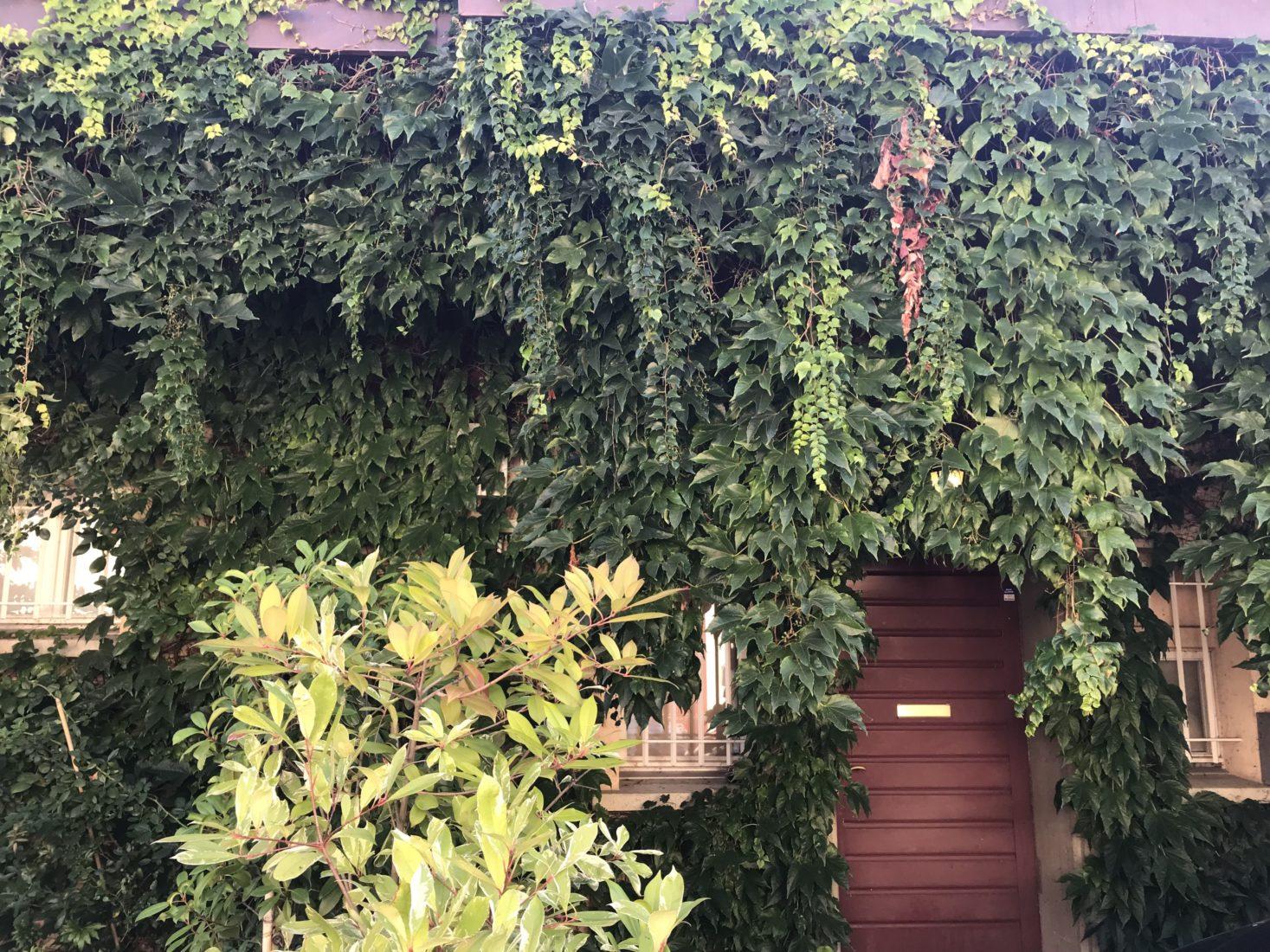 maison rose Simenon rue des Figuiers