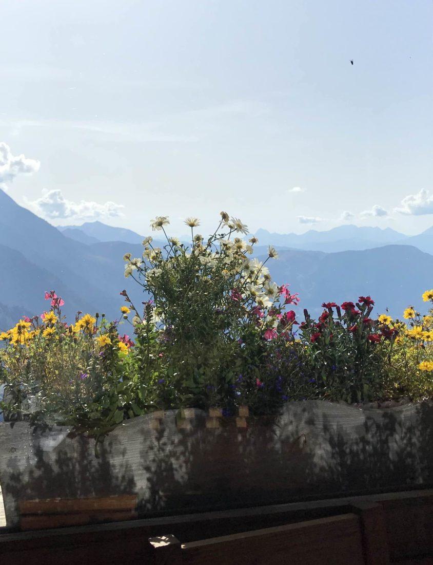 refuge du Plan de l'Aiguille - vue fleurie sur les montagnes