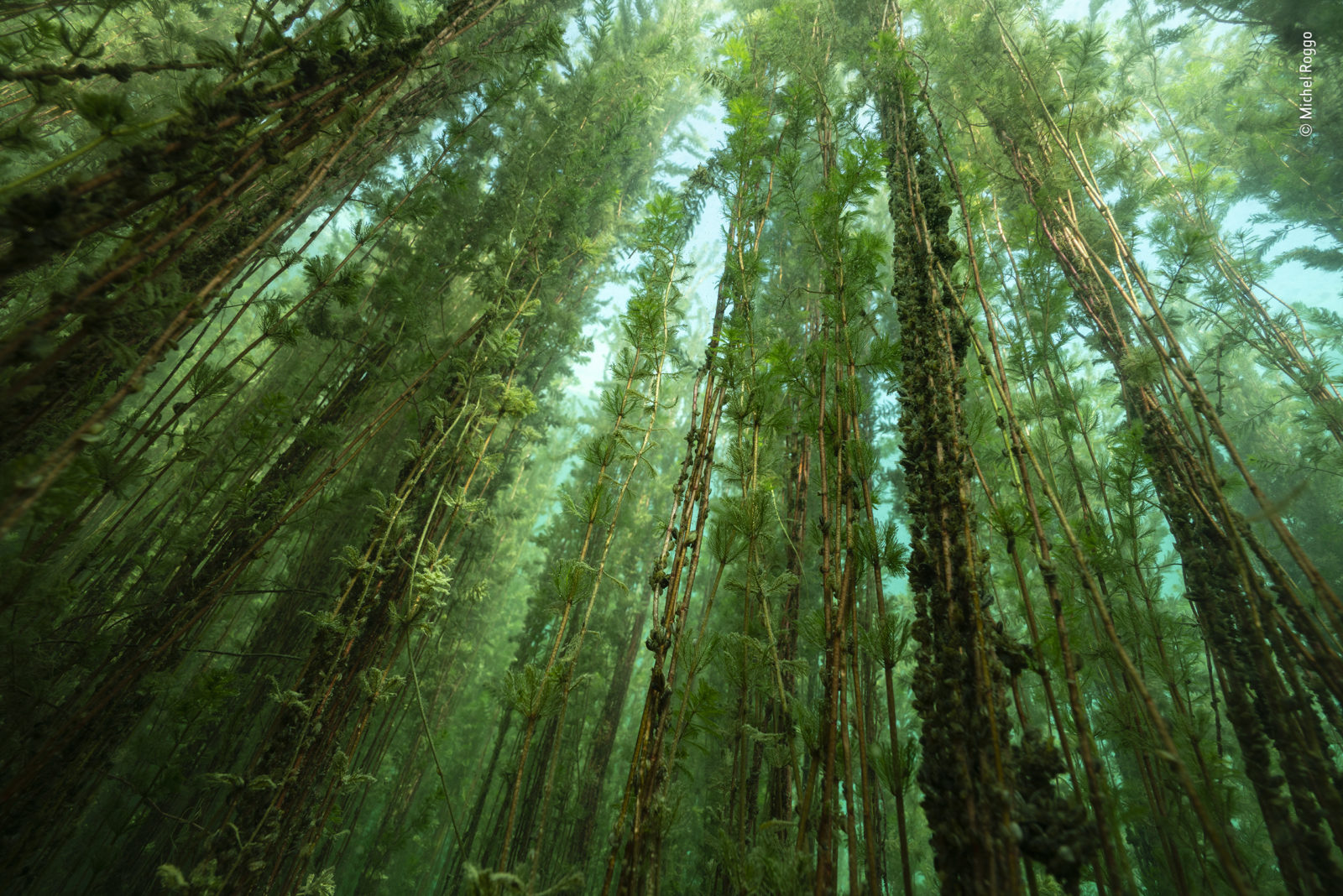 La forêt d'eau douce, Michel Roggo