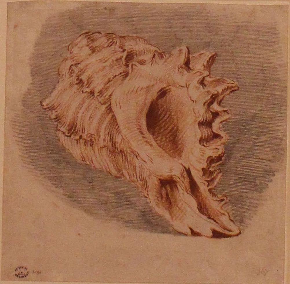 dessin de coquillage F. Boucher