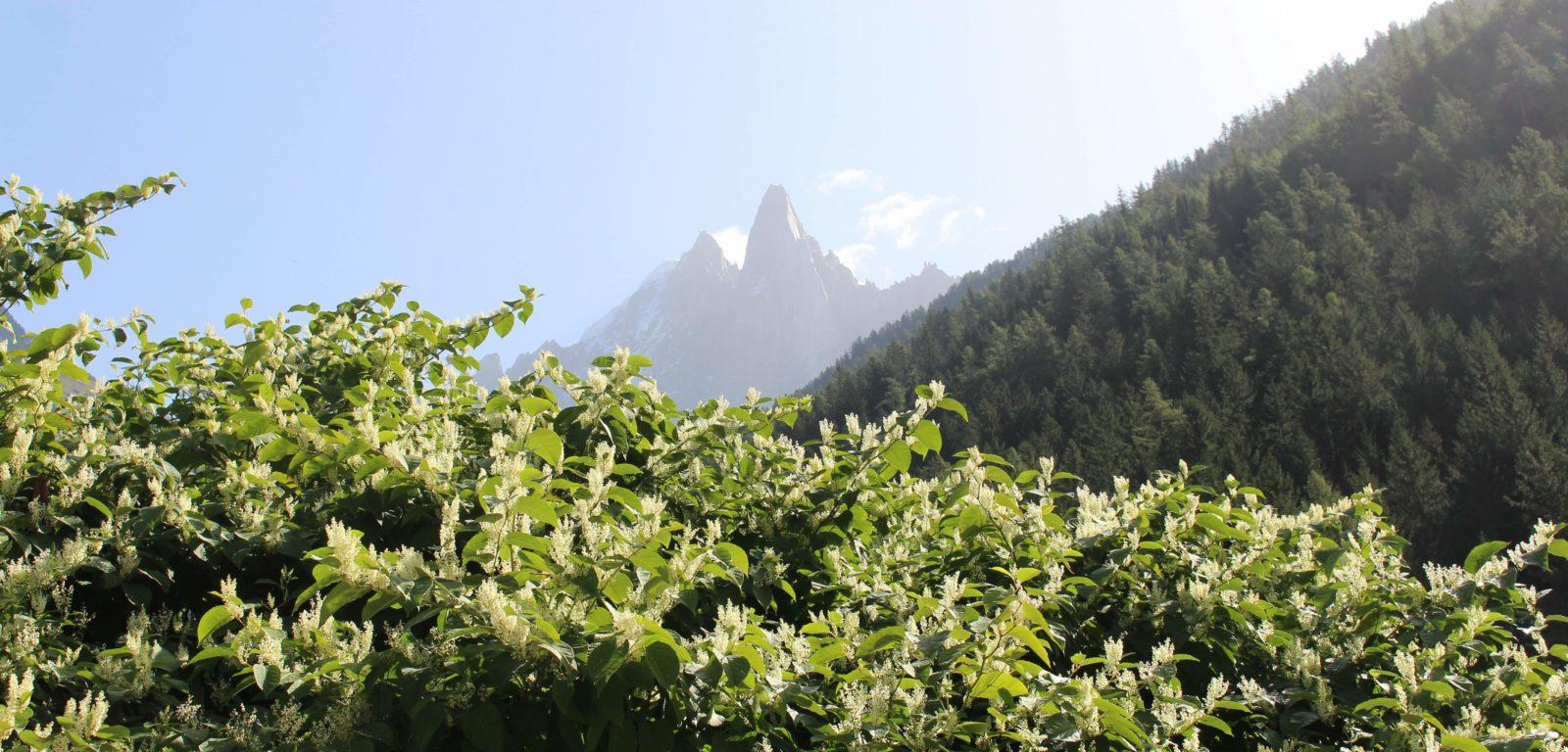 Vue usr les montagnes Chamonix