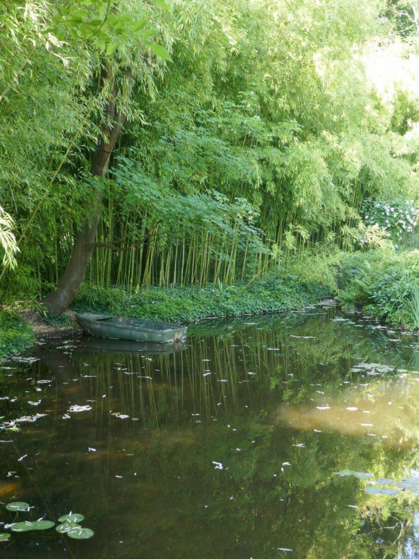 Bois de bambous au jardin  de Claude Monet à Giverny