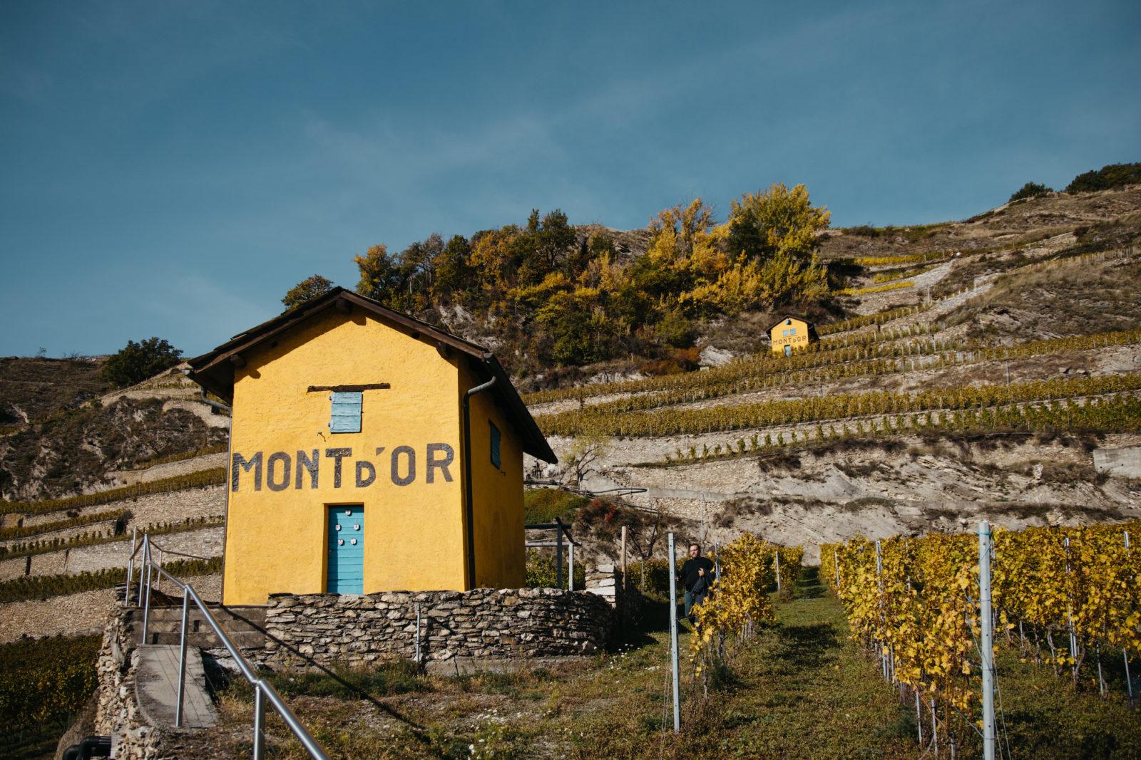Les guérites jaunes au cœur du vignoble du Mont d'Or