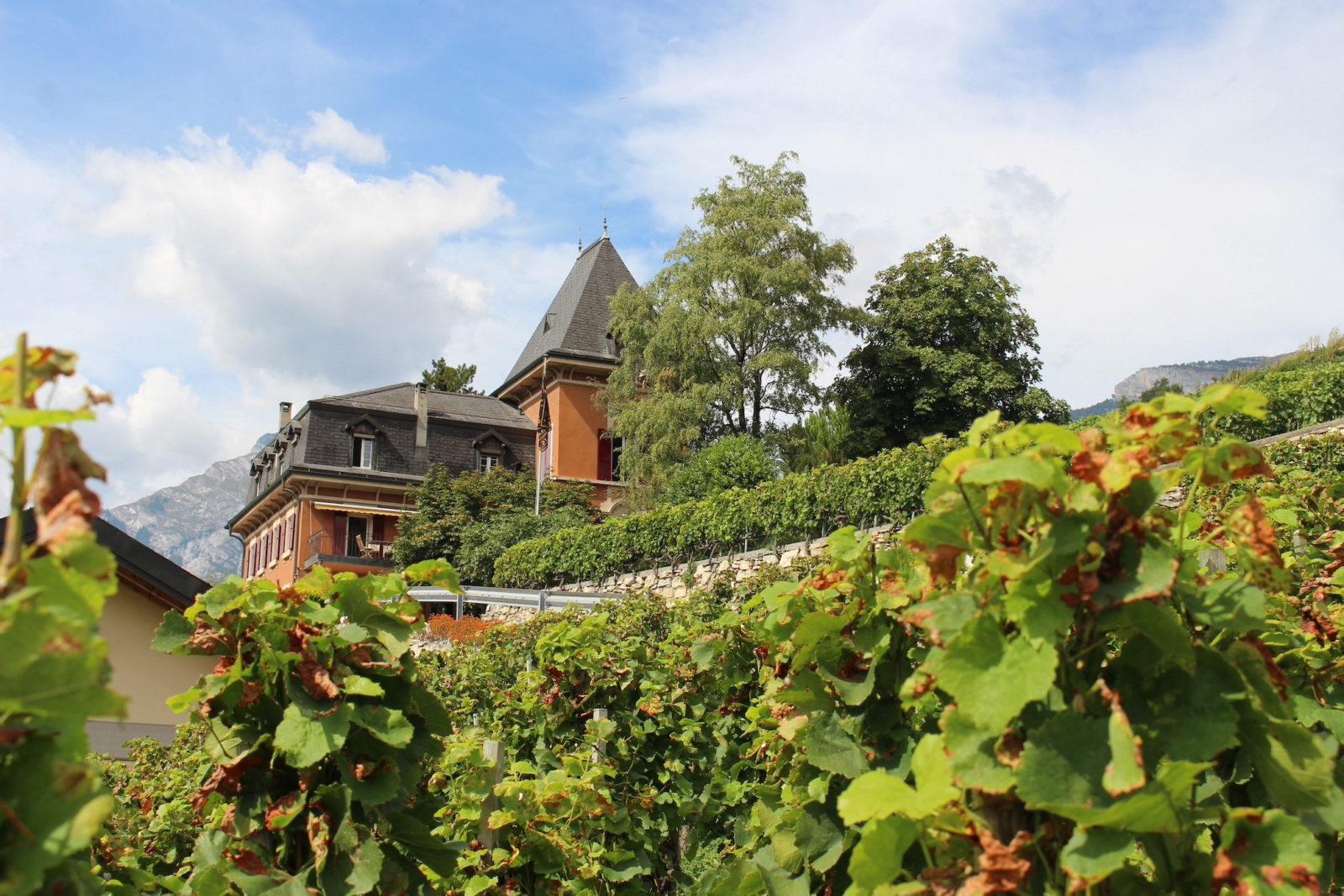 Domaine du Mont d'Or, Sion